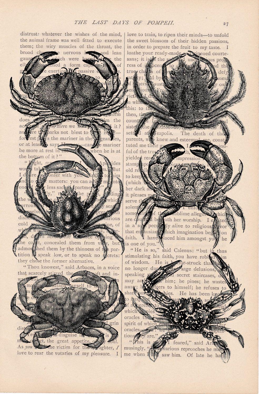 Vintage Crabs Crab Tattoo Crab Illustration Art