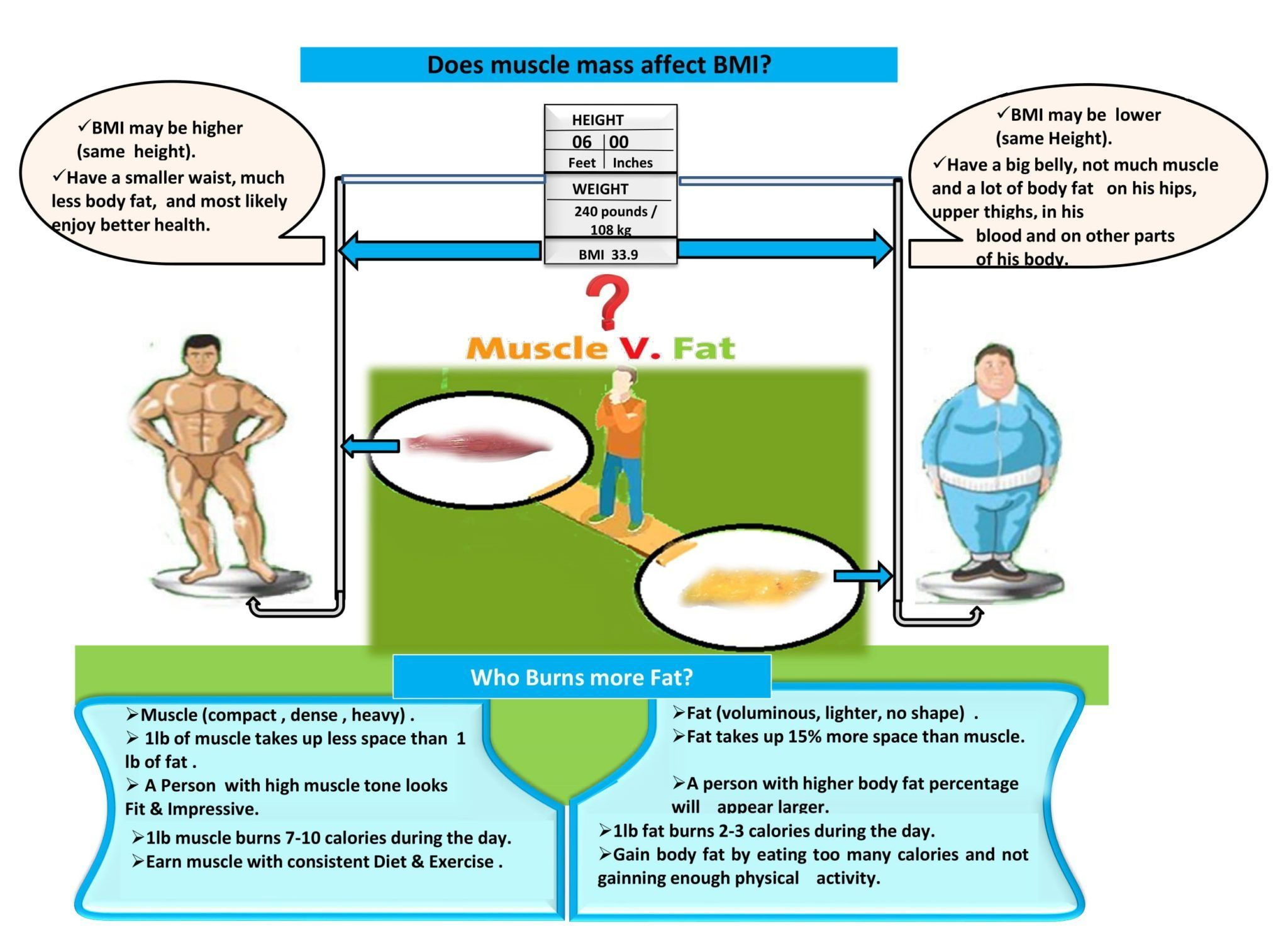 Pin On Muscle Vs Fat