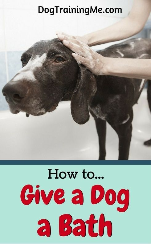 Learn How To Give Your Dog A Bath With As Little Effort As