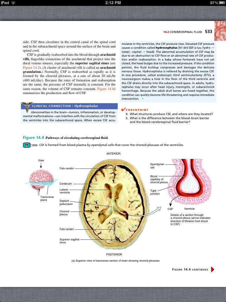 Principles of Anatomy and Physiology, Chapter 14, The Brain and ...