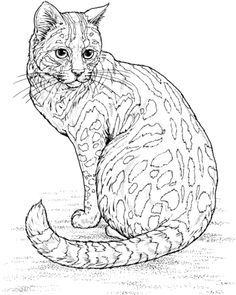 fancy cats coloring book pictures - Google Search (With ...
