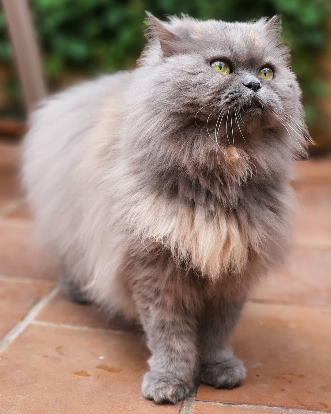 Cute is Not Enough  Cute and Funny Pets Doing Funny Things - Cats & Dogs  Lana  #cats #cat #persiancat #gato #gatti #kittens