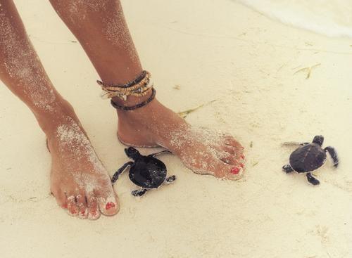 See Sea Turtles Hatch