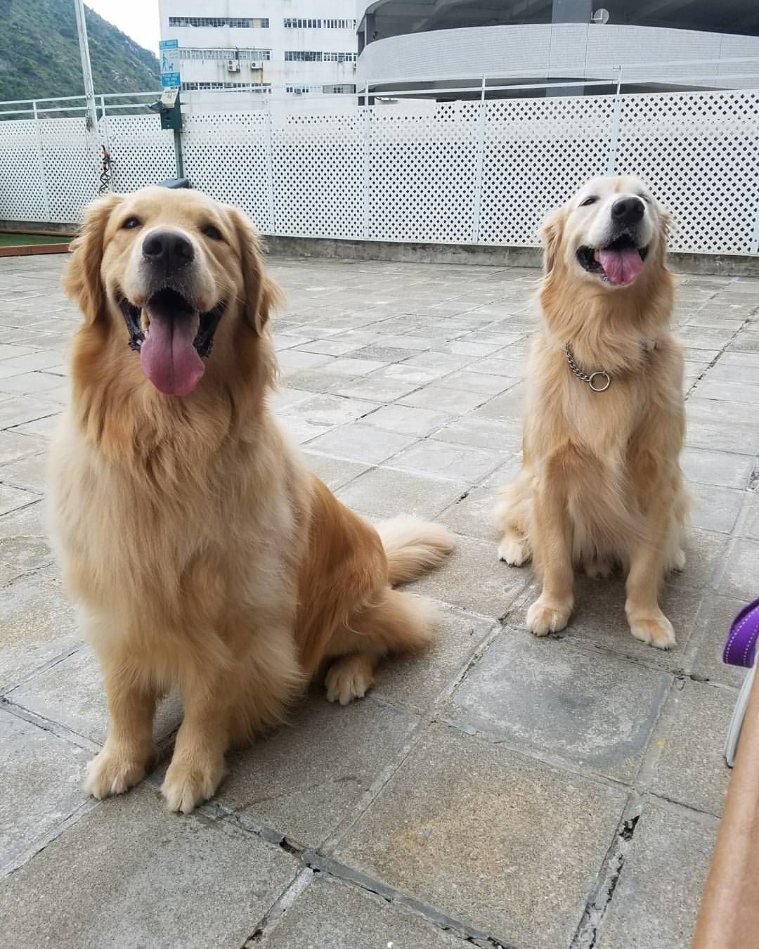 Pin By Sherri Ashford On Poker Dogs Dogs Puppies Happy Boy