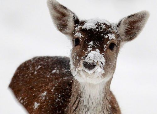 ♥ reindeer are gearing up for the big day