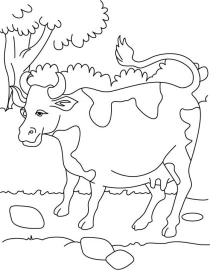 Milk Resource The Cow Coloring Page