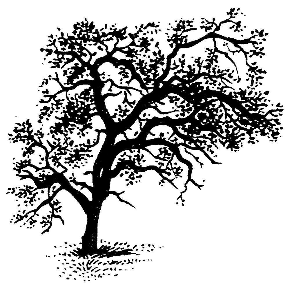 Oak Tree Branch Rubber Stamp