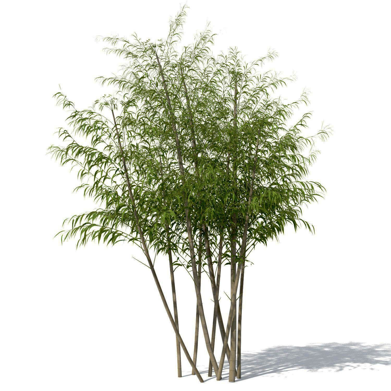 Bamboo Landscape Design Concepts Bamboo landscape