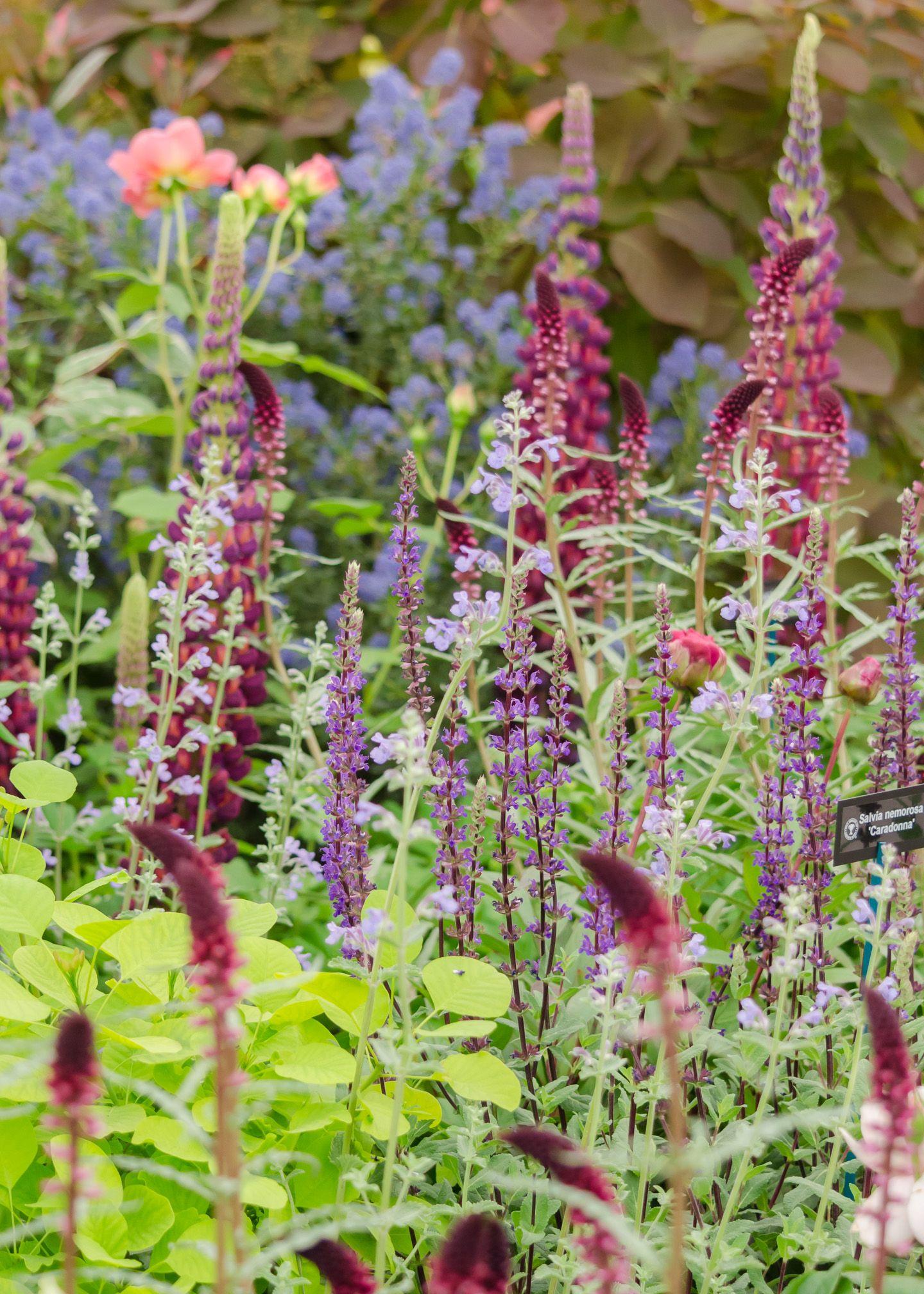 Exploring the Stihl Hillier Garden at RHS Chelsea Flower ...