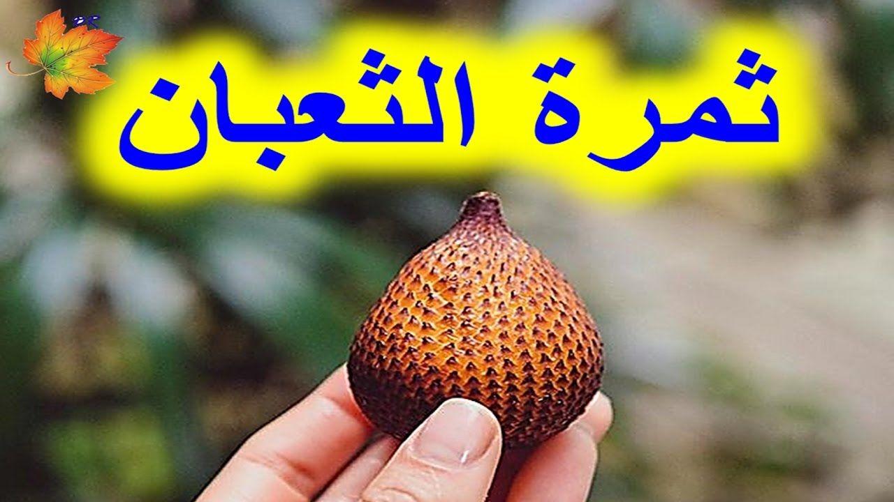 فاكهة الثعبان لعلاج التجاعيد والشيخوخة