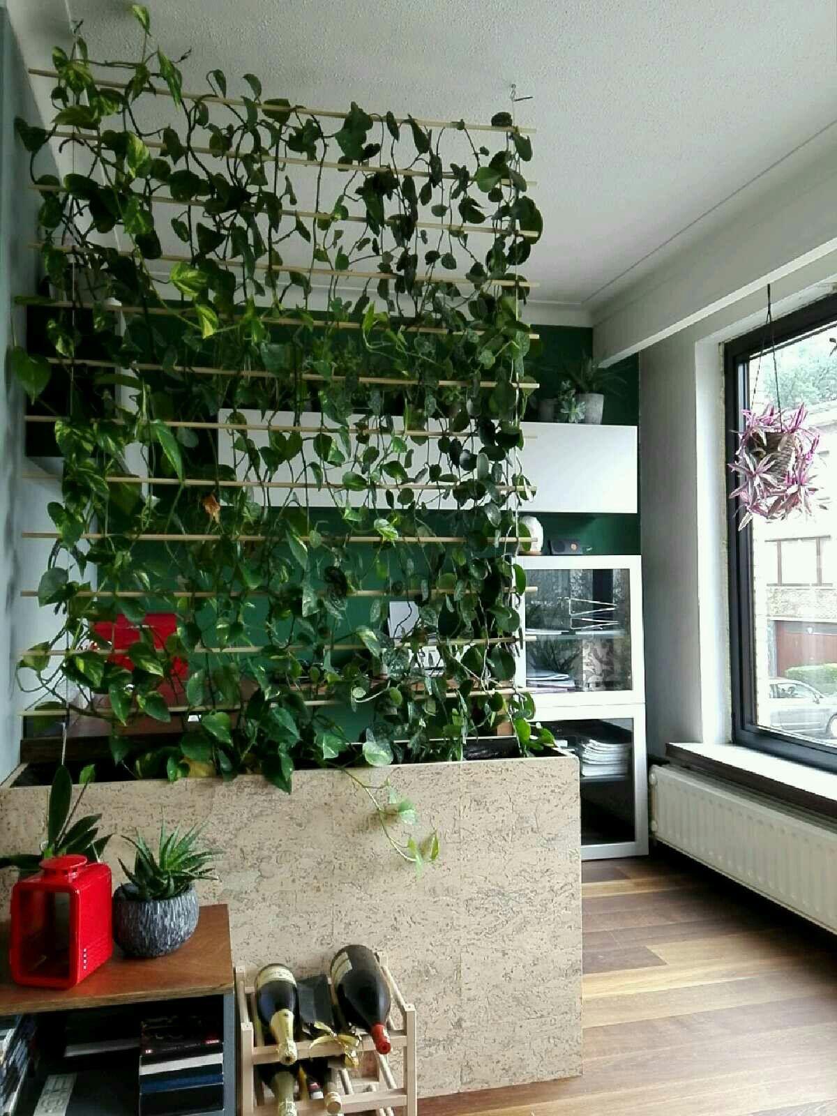 Made A Room Divider With My Plants Quartos De Plantas Divisorias De Quarto Plantas Indoor My trellis room divider