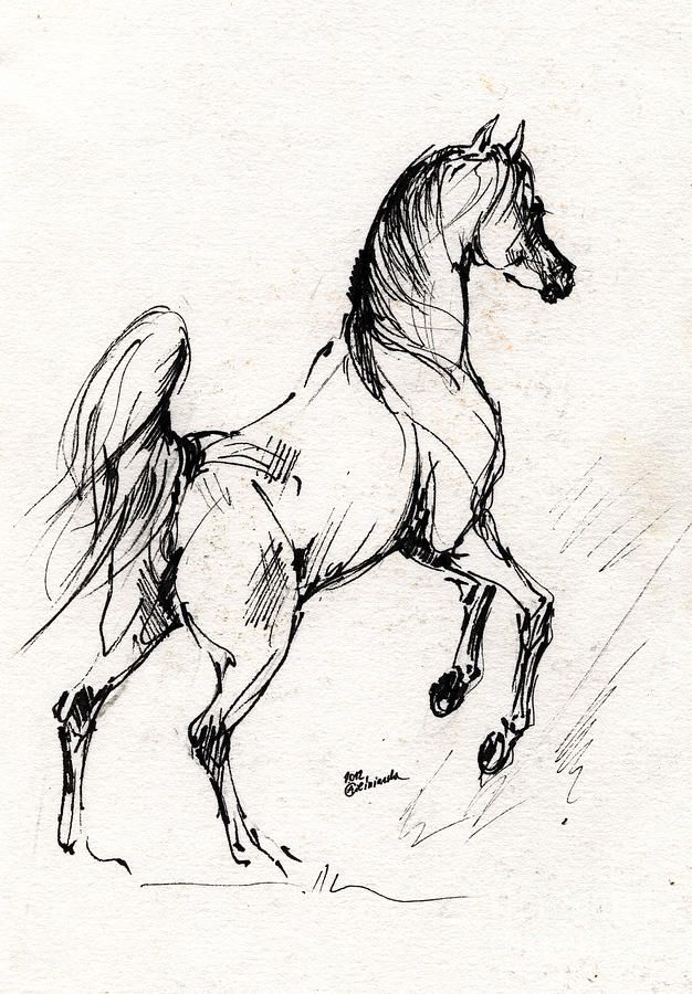 Horse Sketch 30 07 2013 Drawing by Angel  Tarantella