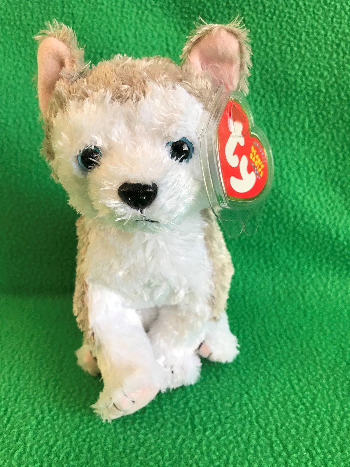 NEW MINT with MINT TAGS TY CORKY the DOG BEANIE BABY