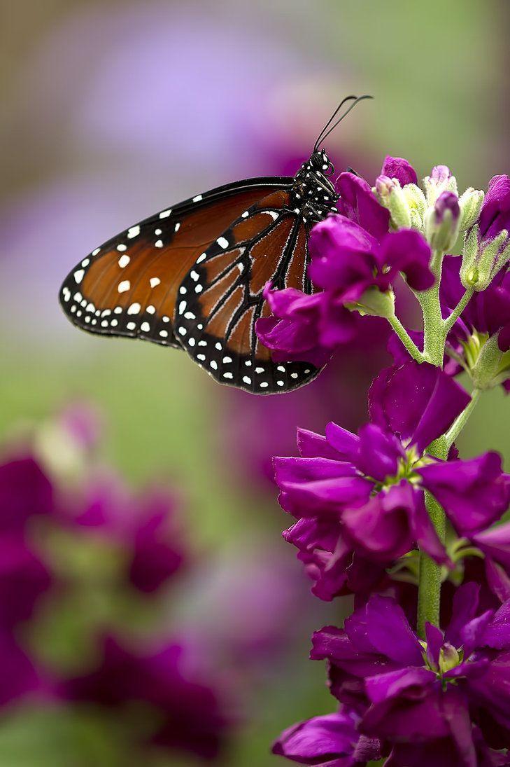 Butterfly Moment Beautiful Butterflies Butterfly Butterfly Flowers