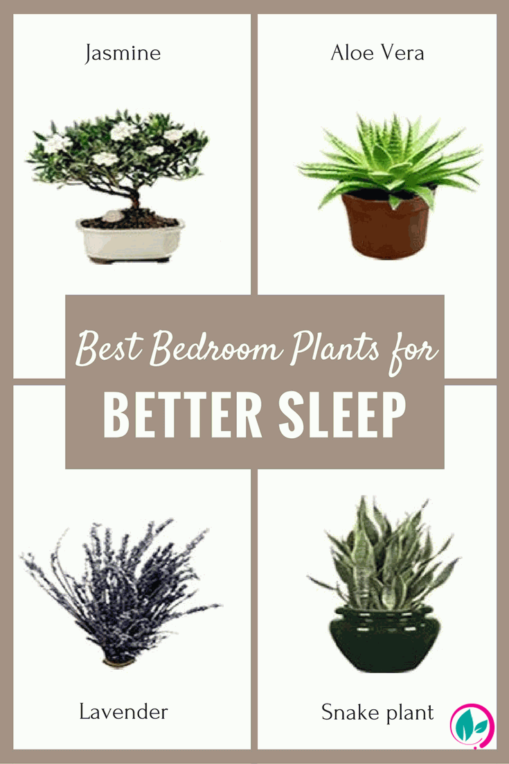 If You Want Better Sleep Your Bedroom Shouldn T Lack These 5 Plants Best Plants For Bedroom Plants House Plants Indoor