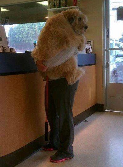 That's a big puppy.