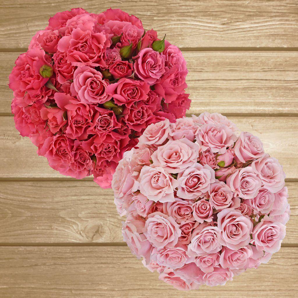 Spray Roses 40cm Pack 120 Stems Ebloomsdirect Where To Buy Bulk Flowers Online For Your Wedding Rose Spray Roses Flower Crown Wedding Flower Girl Headpiece