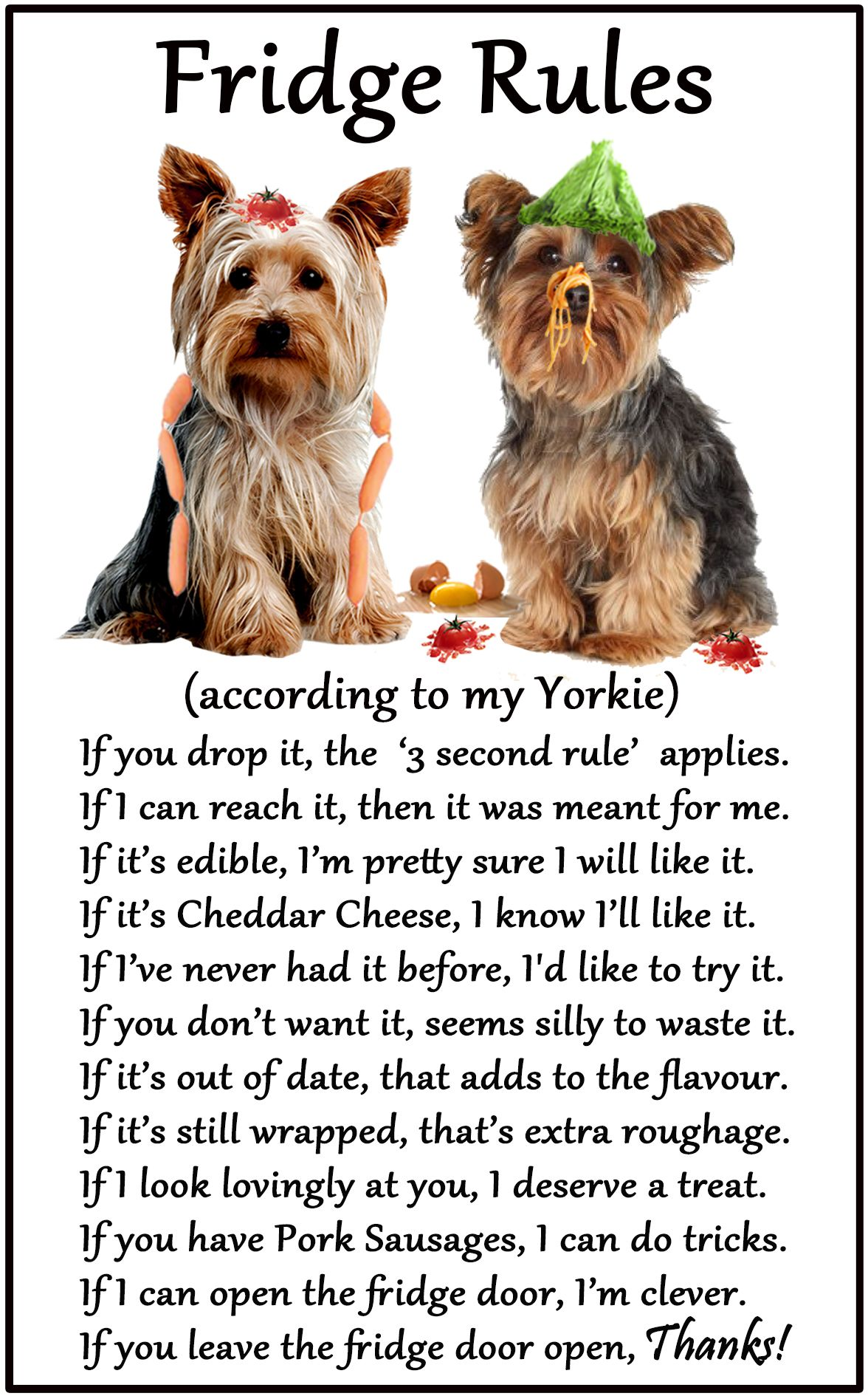 Yorkshire Terrier / Yorkie Humorous Dog Fridge