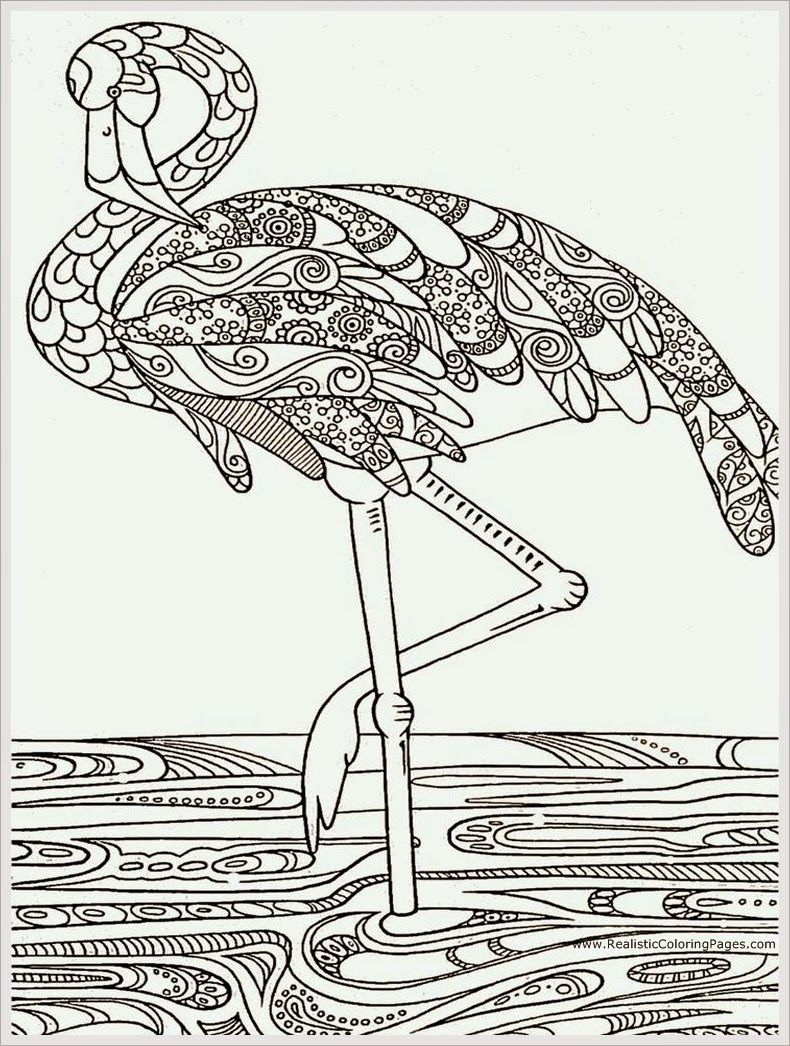 Heron Bird Adult Coloring Pages Free Flamingo Color Flamingo