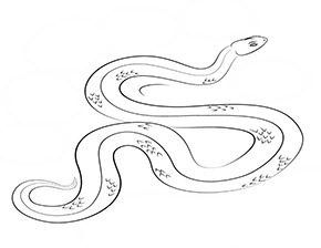 Schlangen Ausmalbilder Ausmalbilder Schlangen Snake Coloring Pages Coloring Pages Art Sketches