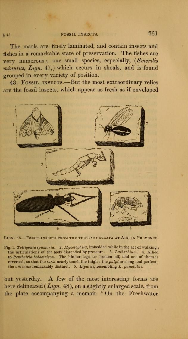 v. 1 (1848) - The wonders of geology; or A familiar exposition of geological phenomena. - Biodiversity Heritage Library