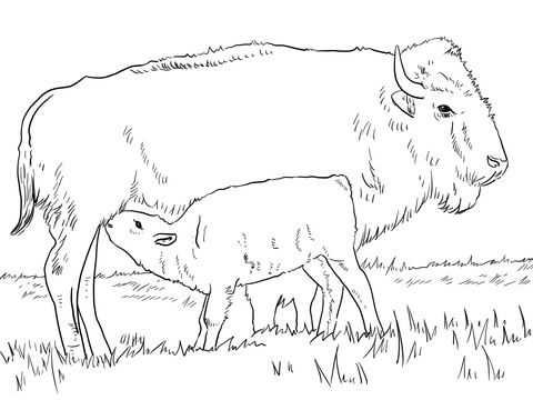 American Bison With Calve Coloring Page Horse Coloring Pages Animal Coloring Pages Coloring Pages