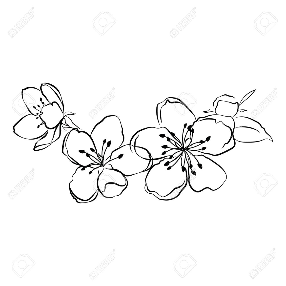 Blooming Cherry Sakura Branch With Flower Buds Black And White Royalty Free Cliparts Vectors And Cherry Blossom Art Flower Drawing Cherry Blossom Drawing