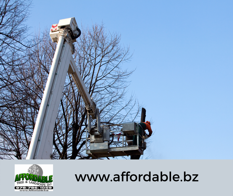 Affordable Tree and Landscape offers Tree Removal Services for those located in the area of Westminster, MA.     We do complete tree removal and stump grinding when necessary, to permanently remove trees that no longer serve their purpose.     #treeremoval #treeremovalservice #treetrimming #treeservices #treecompany #stumpgrinding #snowremoval #snowremovalservices #roadsidecleanup #woodprocessing #treetrunkremoval #logs
