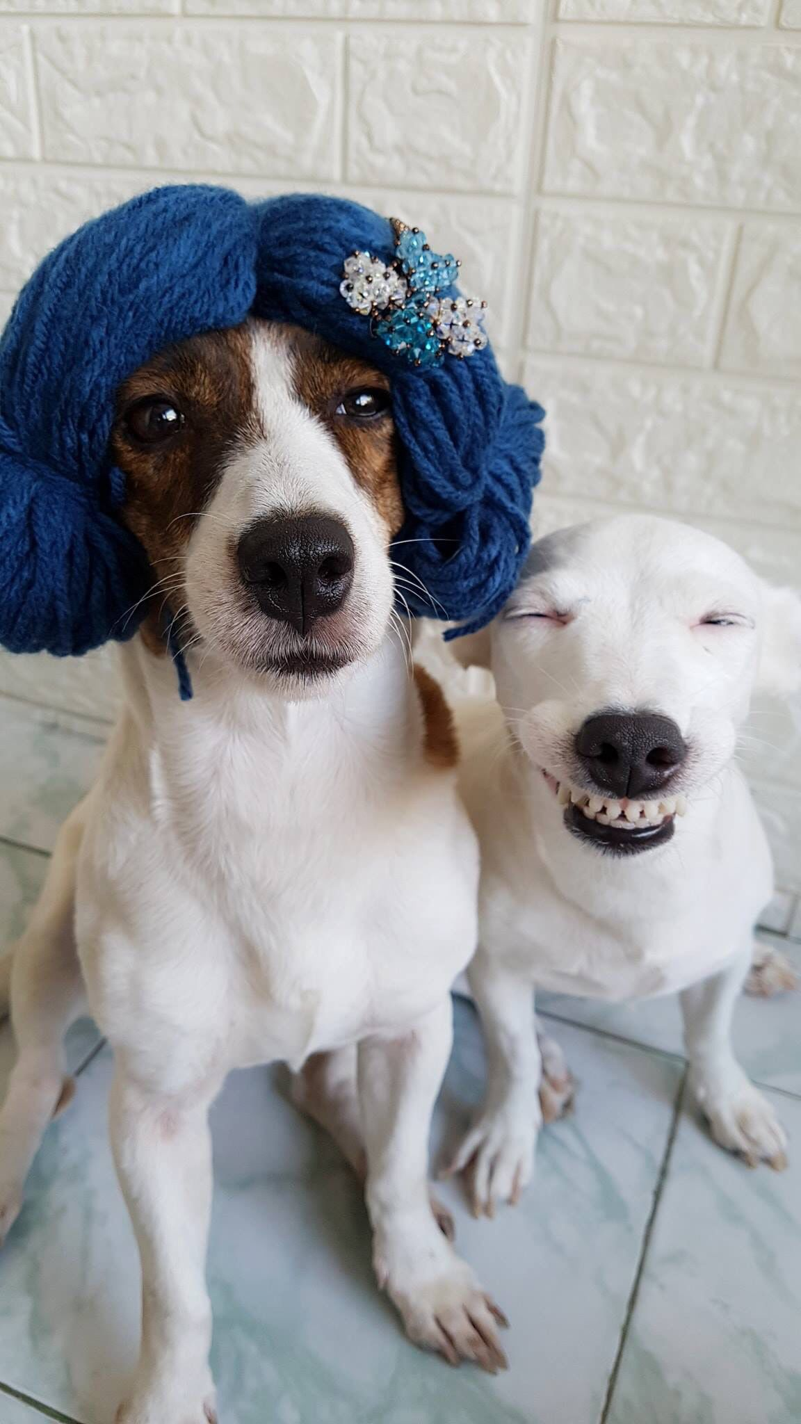 This Makes Me Smile So Much With Images Funny Animals Dog
