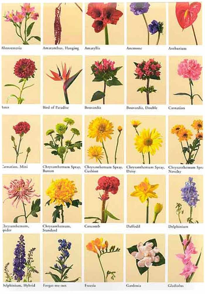 List Of Flowers With Pictures And Names Picture Papers List Of Flowers Different Types Of Flowers Flower Names
