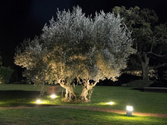 Discover The Best Trees To Plant Around Your Pool Idee Giardino