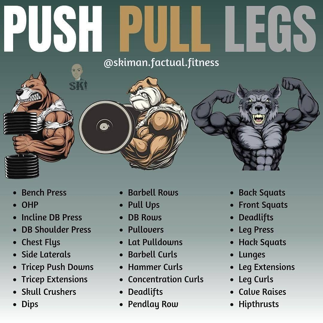 *PUSH PULL LEGS* by  -⠀⠀⠀⠀⠀⠀⠀⠀⠀ Follow  for daily fitness/nutrition tips & educa... #fitness #good #...