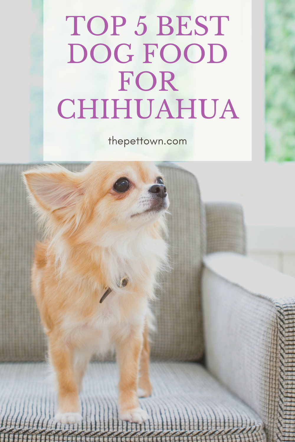 Top 5 Best Dog Food For Chihuahua Best Dog Food Best Dogs Dogs