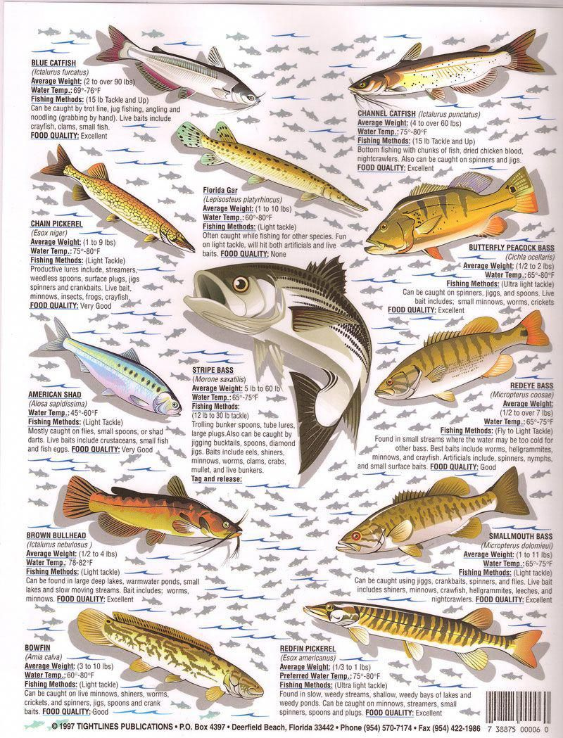 can you eat bass fish eggs  bass fish