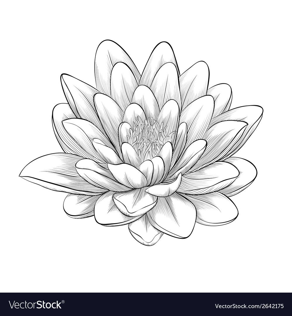 Black and white lotus flower vector image on Lotus