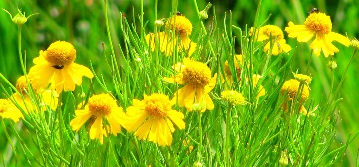 Purtttty flowers