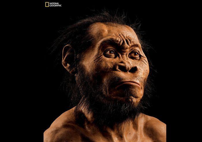 Paleontologi John Gurchen rakentama näköisveistos Homo naledista.