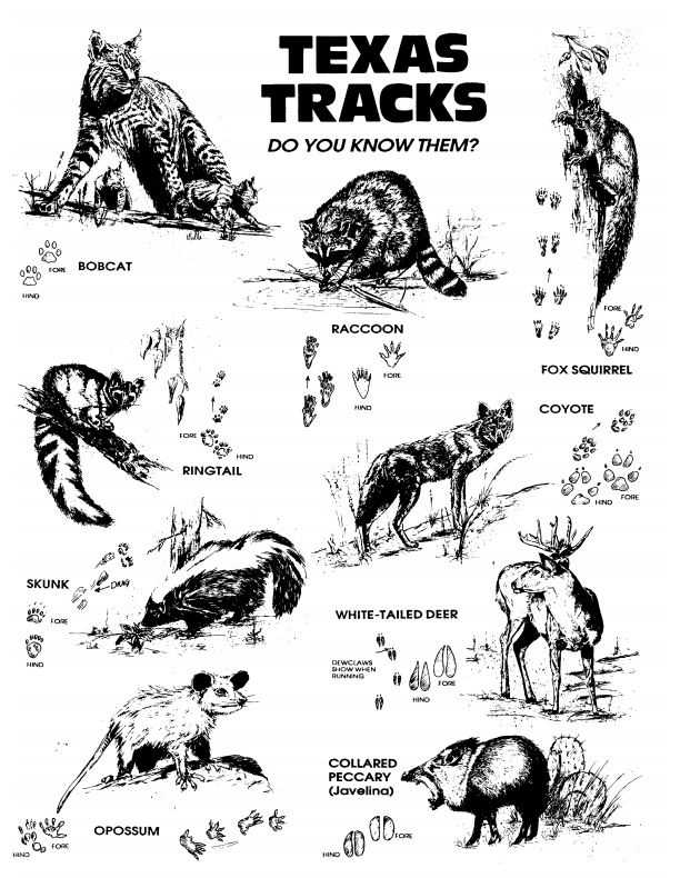 Texas Tracks: Do you know them? www.texasenvirothon.org