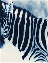 Zebra Etosha, Namibia