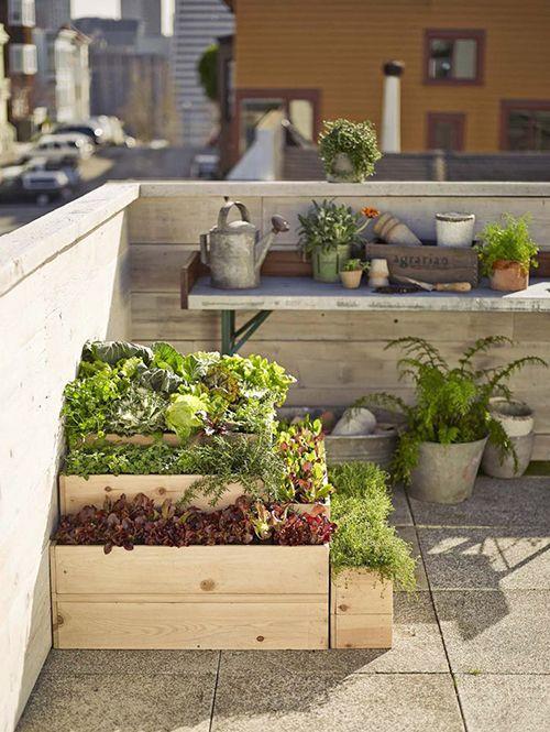 Jardin urbano azotea autocultivo ecologico ciudad ideas - Huerto y jardin ...