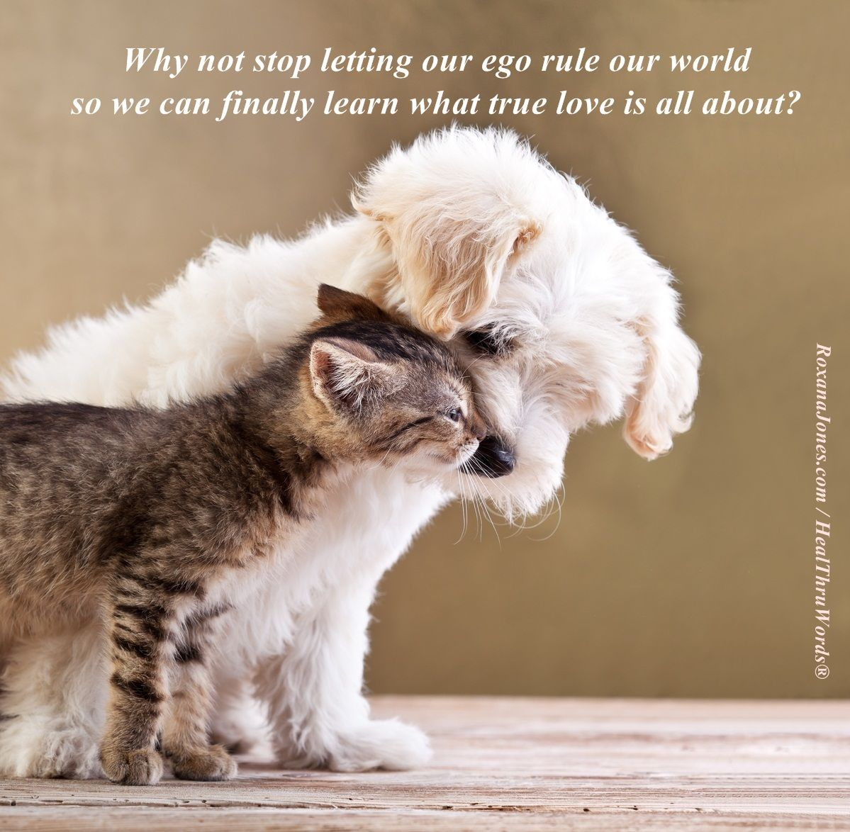 Explore Quotes About Cats, Great Quotes, And More!