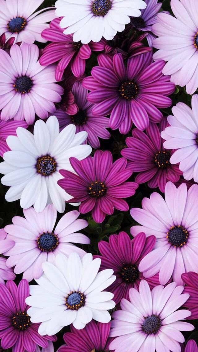 Flor Morada Flo Pinterest Wallpaper Flowers And Drawing Ideas