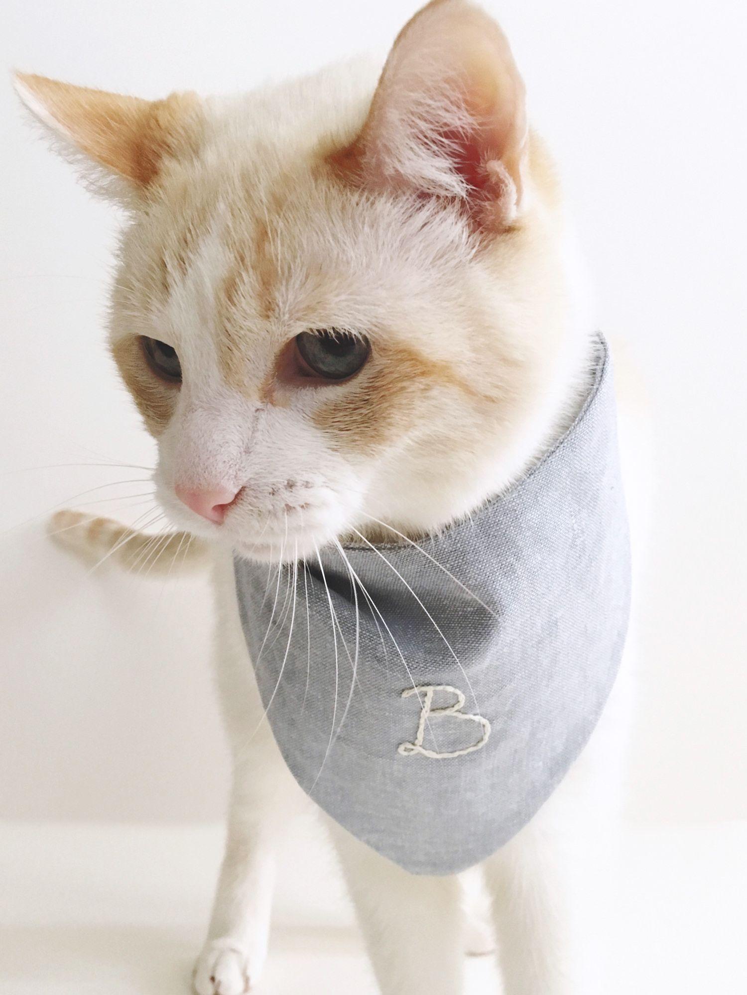 Diy Bandana For Your Cat Siamese Social Club Cat Care Cat Diy Cats