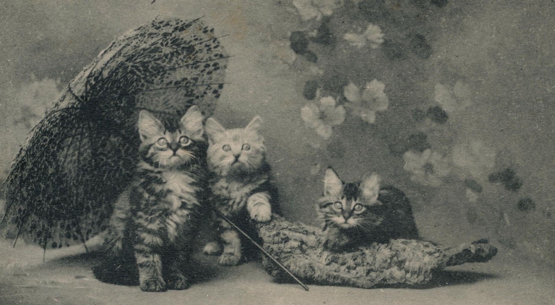 Kittens Vintage Kittens Vintage Kitten Wallpaper Vintage Cat