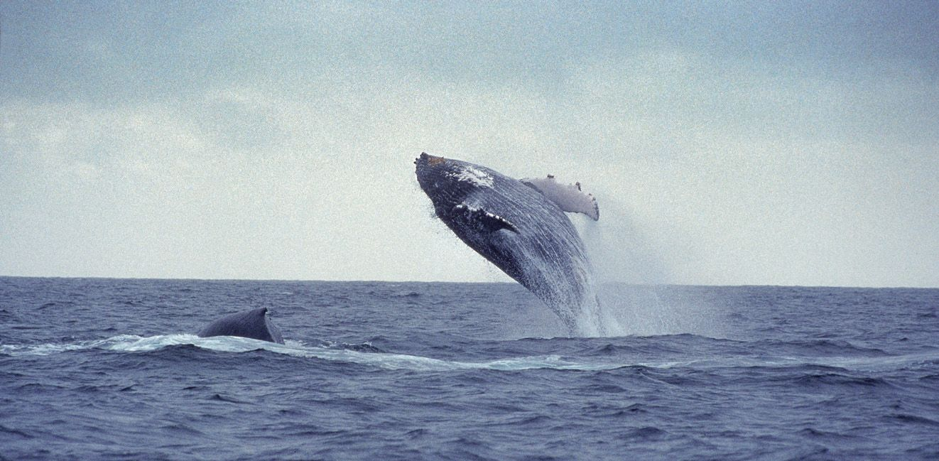 Whale Watching from Reykjavik for Cruise Ship Passengers