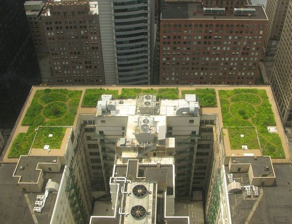 Chicago City Hall Rooftop Garden Reduces Heat Island Effect Green Roof Residential Green Roof Design Green Roof