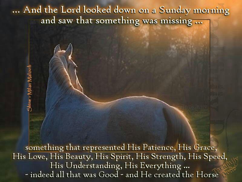 God Horse Quotes Pinterest Horses Beautiful Horses And