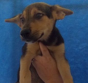 Flopsy Is A Female Hound Mix Puppy Who Is Available For Adoption Now Id 17 D1898 R N Dog Adoption Dogs