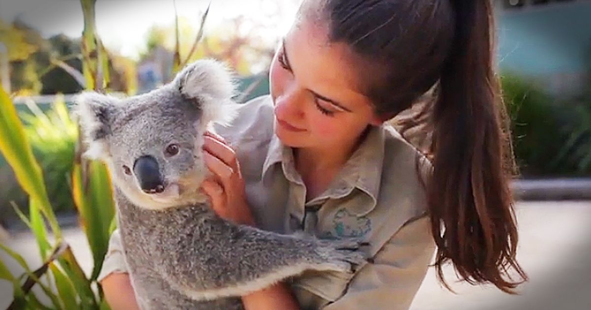 Imogen the Koala sure does love getting belly rubs. Luckily for Imogen, the staff at the Symbio Wildlife Park in Australia are always ready to give her ALL the cuddles. Who else wants to love on her too?