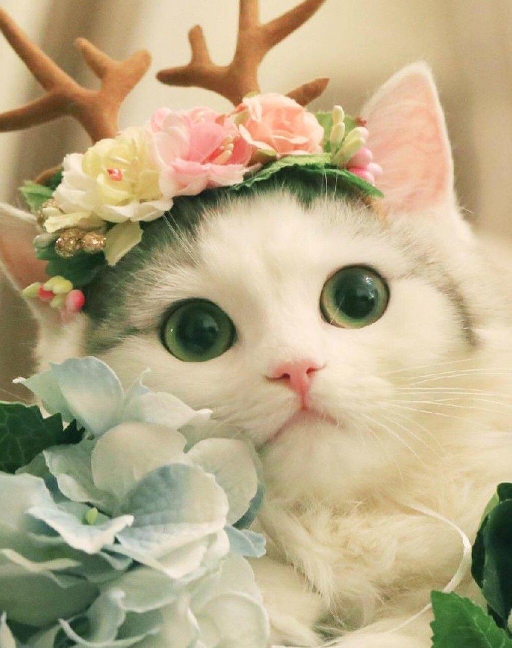 Beautiful Cat Pretty Cats Cute Animal Drawings Cute Cats